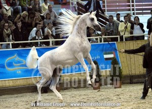 WH Justice - Aachen 2011